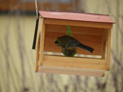 FOTKA - Ptáci v zimě 195