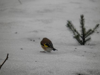 FOTKA - Ptáci v zimě 197