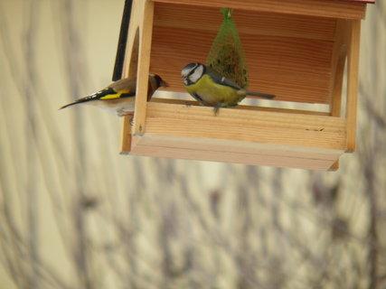 FOTKA - Ptáci v zimě 199