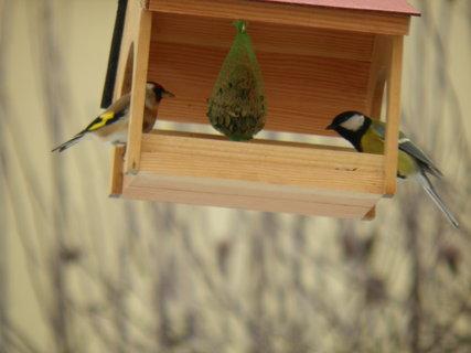 FOTKA - Ptáci v zimě 200