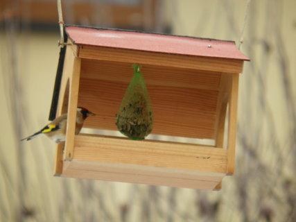 FOTKA - Pt�ci v zim� 201