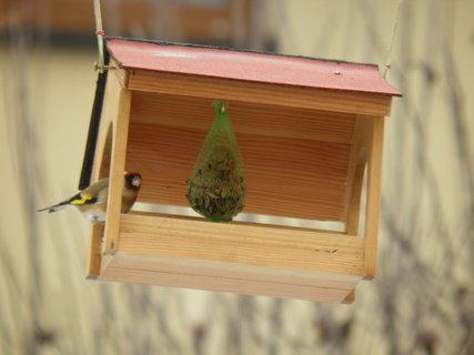 FOTKA - Ptáci v zimě 202