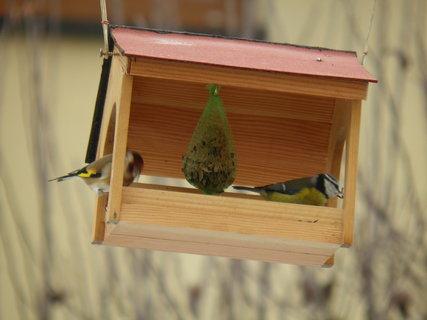 FOTKA - Ptáci v zimě 203