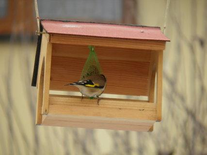 FOTKA - Ptáci v zimě 205