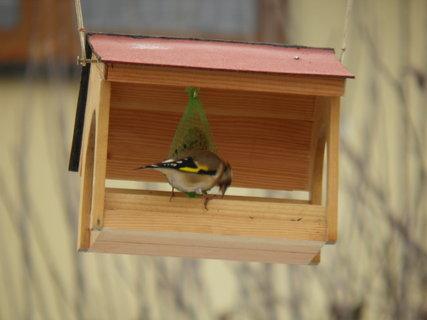 FOTKA - Ptáci v zimě 206