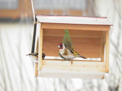 FOTKA - Ptáci v zimě 208