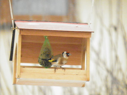 FOTKA - Ptáci v zimě 210