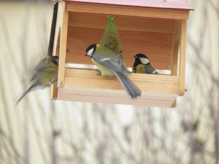 FOTKA - Ptáci v zimě 211