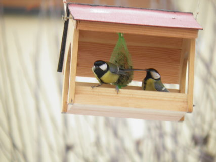 FOTKA - Ptáci v zimě 212