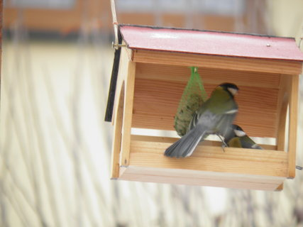 FOTKA - Ptáci v zimě 213