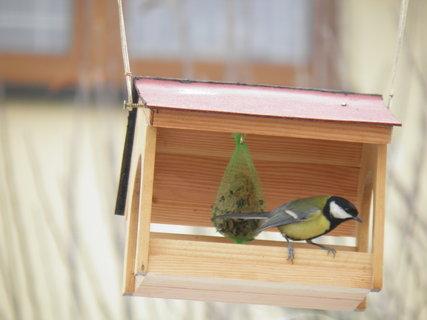FOTKA - Pt�ci v zim� 214