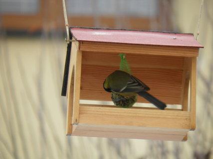 FOTKA - Ptáci v zimě 215