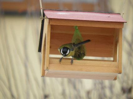 FOTKA - Ptáci v zimě 216