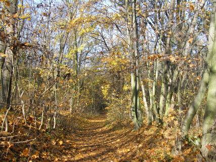 FOTKA - Podzimní procházka 2