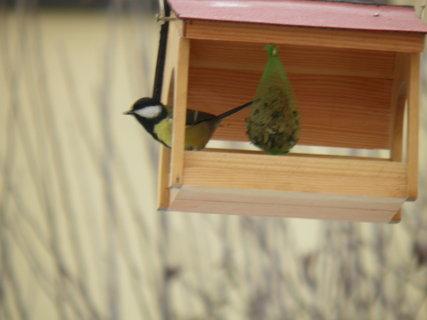 FOTKA - Pt�ci v zim� 217
