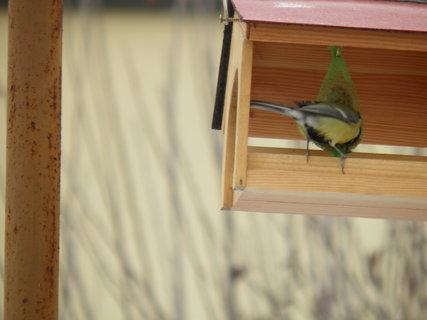 FOTKA - Ptáci v zimě 218