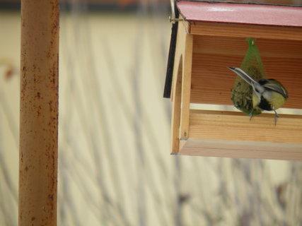 FOTKA - Ptáci v zimě 219