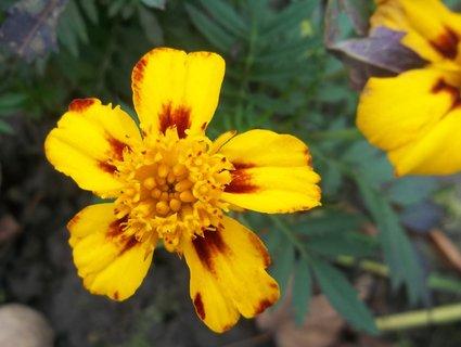 FOTKA - afrikán 17.11. na zahradě.