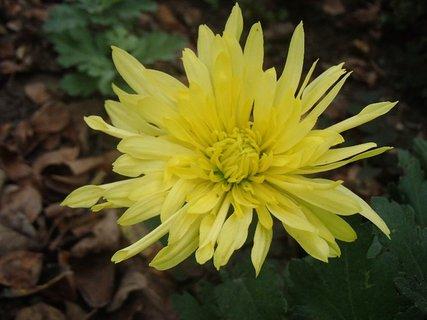 FOTKA - strapatá žltá