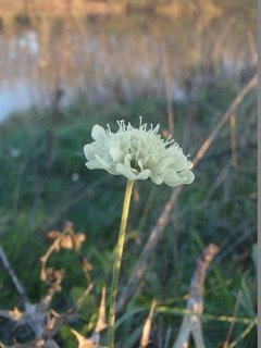 FOTKA - jednoduchý biely kvietok - kvitne v novembri