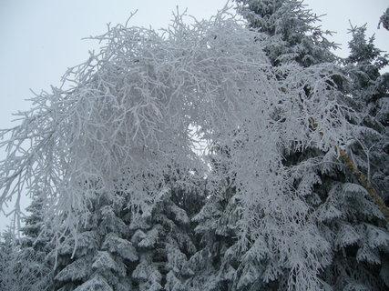 FOTKA - zimní strom
