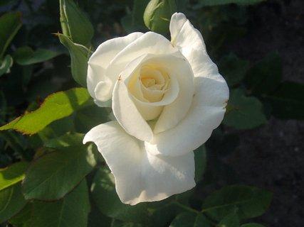 FOTKA - ešte jedna biela