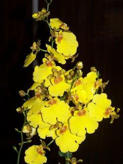FOTKA - Orchideje 19