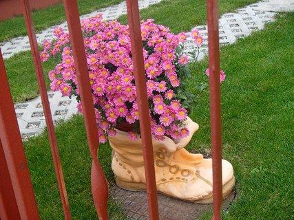 FOTKA - kvety v čižme - foto z blízka