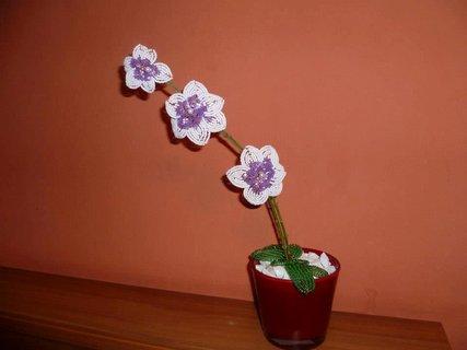 FOTKA - orchidei