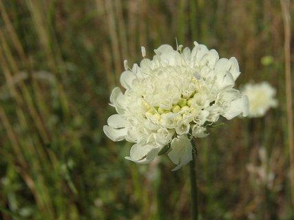 FOTKA - ešte pár kvietkov kvitne