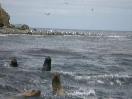 FOTKA - bráchovy fotky z cest - ledovec, Patagonie, tuleni