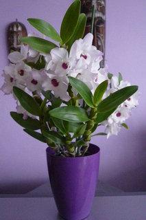 FOTKA - orchidej,krásně kvete