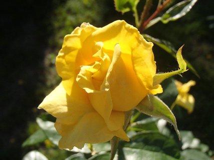 FOTKA - kráska zo záhrady
