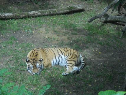 FOTKA - zoo5