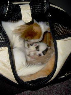 FOTKA - Štěně s mamkou