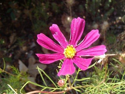 FOTKA - úplne posledný kvet v novembri