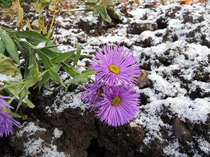FOTKA - Vytrvalé trvalky zima nezaskočila