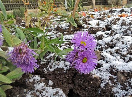 FOTKA -  astřice kvetou už od jara