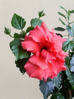 FOTKA - květy5