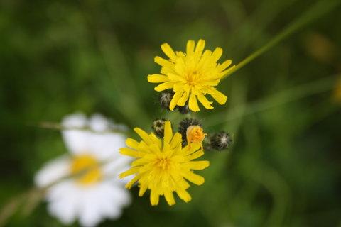 FOTKA - žlutá s bílou
