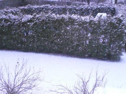 FOTKA - Sněhová nadílka na zahradě