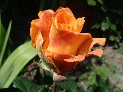 FOTKA - e�te jedna oran�ov�