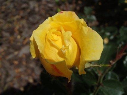 FOTKA - aj žltá je pekná