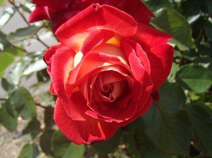 FOTKA - ešte jedna červená