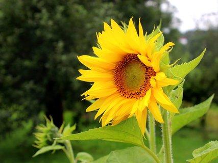 FOTKA - květena1