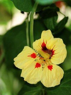 FOTKA - květena8