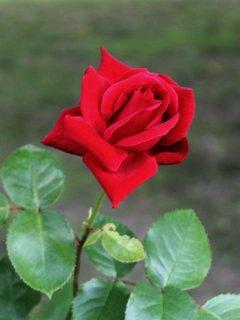 FOTKA - květena9
