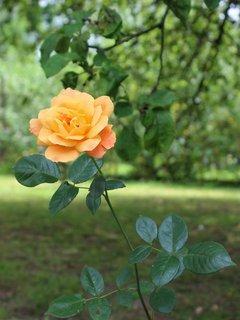 FOTKA - květena21