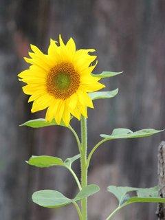 FOTKA - květena36