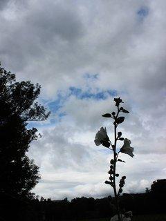 FOTKA - květena42